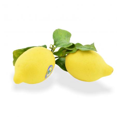 Zitronen mit Blatt unbehandelt - Täglich frische Zitronen mit Blatt unbehandelt von unserem Bio und Knospe zertifiziertem Gemüse