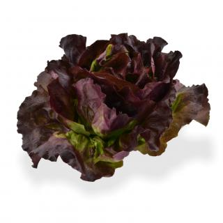 Kopfsalat Rot - Täglich frische Kopfsalat Rot von unserem Bio und Knospe zertifiziertem Gemüse und Früchte Lieferanten aus der R