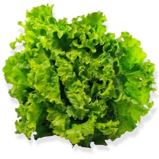 BIO Batavia grün - Täglich frische Birnen Kaiser von unserem Bio und Knospe zertifiziertem Gemüse und Früchte Lieferanten aus de