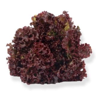 BIO Batavia rot - Täglich frische Birnen Kaiser von unserem Bio und Knospe zertifiziertem Gemüse und Früchte Lieferanten aus der