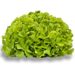 BIO Eichblattsalat Grün - Täglich frische Birnen Kaiser von unserem Bio und Knospe zertifiziertem Gemüse und Früchte Lieferanten