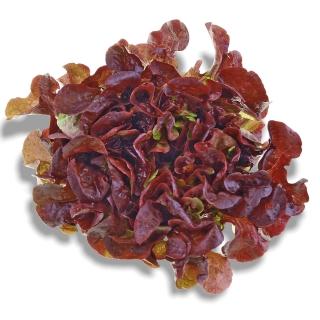 BIO Eichblattsalat Rot - Täglich frische Birnen Kaiser von unserem Bio und Knospe zertifiziertem Gemüse und Früchte Lieferanten