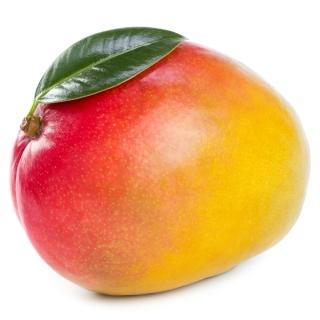 BIO Mango - Täglich frische BIO Mango von unserem Bio und Knospe zertifiziertem Gemüse und Früchte Lieferanten aus der Region